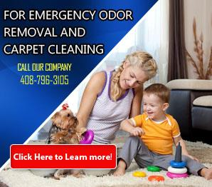 Blog | Carpet Cleaning Milpitas, CA